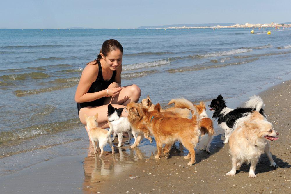 Chihuahua Hund kaufen