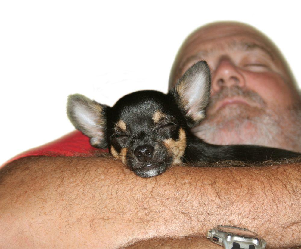 Chihuahua Kaufen