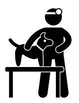 Chihuahua Tierarzt