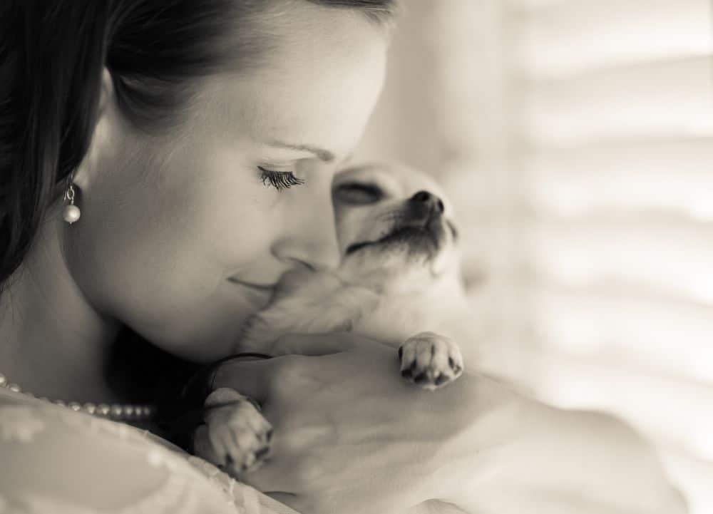 Chihuahua als Therapiehund