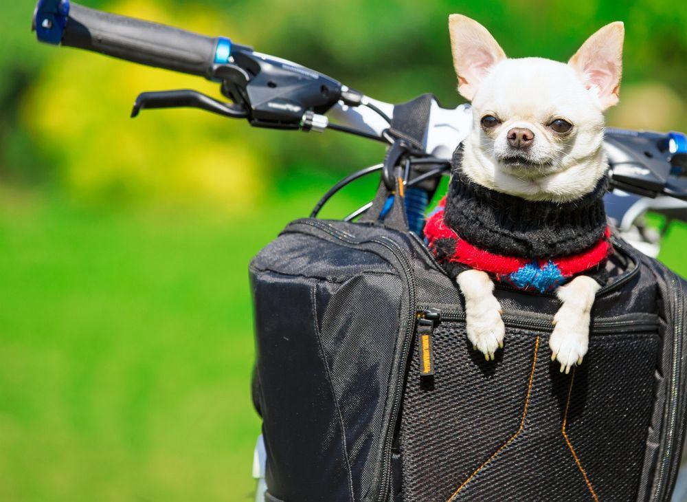 Chihuahua Fahrrad Lenkertasche