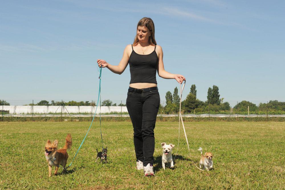 Gesunde Ernährung und viel Bewegung Chihuahua