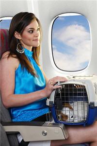 Hundebox Im Flugzeug