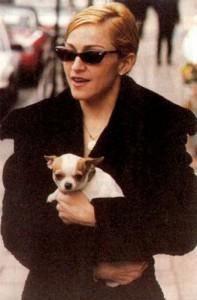 Madonna mit Chihuahua