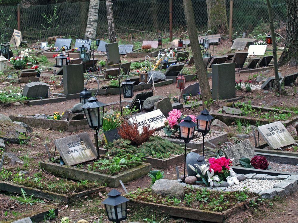 Tierfriedhof Chihuahua