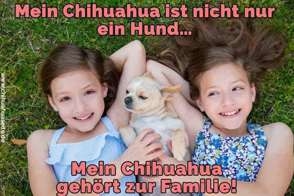 Zwei Mädchen liegen auf dem Rasen mit einem Chihuahua