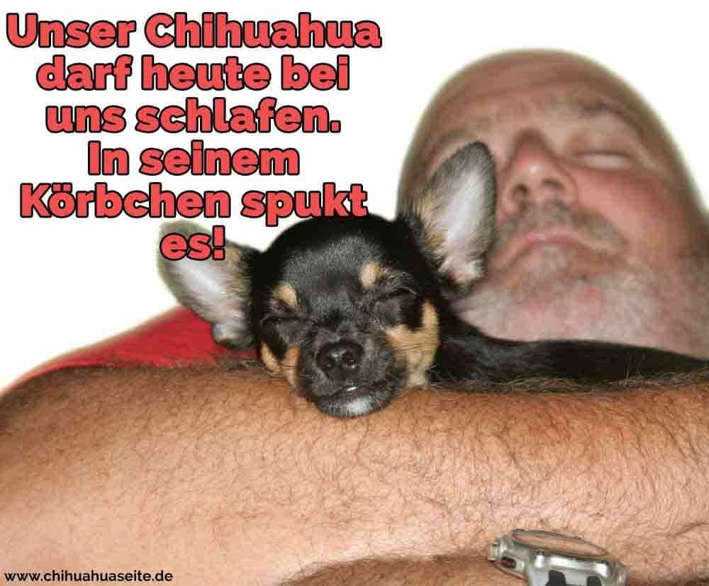 Ein Mann umarmt ihren Chihuahua