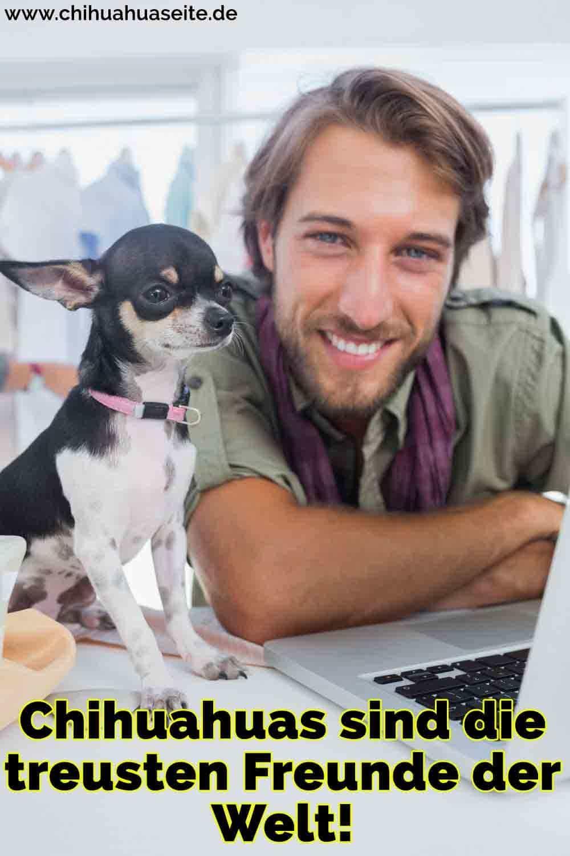 Ein Mann arbeitet neben Ihrem Chihuahua