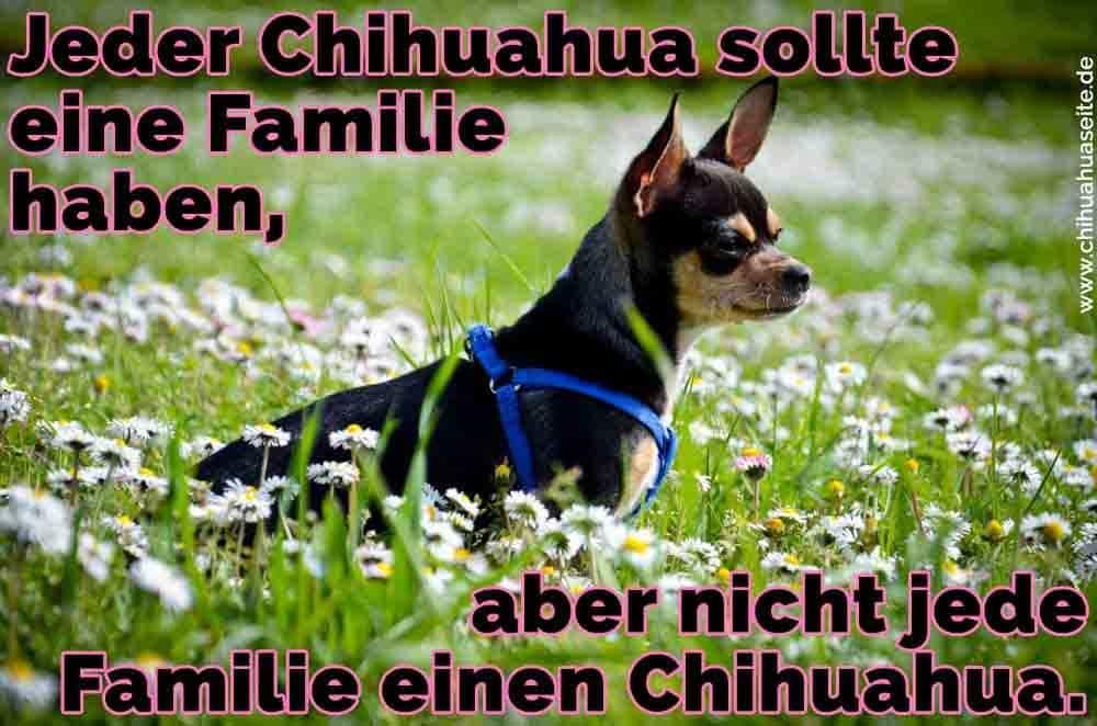 Ein Chihuahua in Blumen stehen