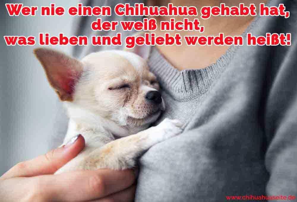 Eine Frau umarmt ihren Chihuahua