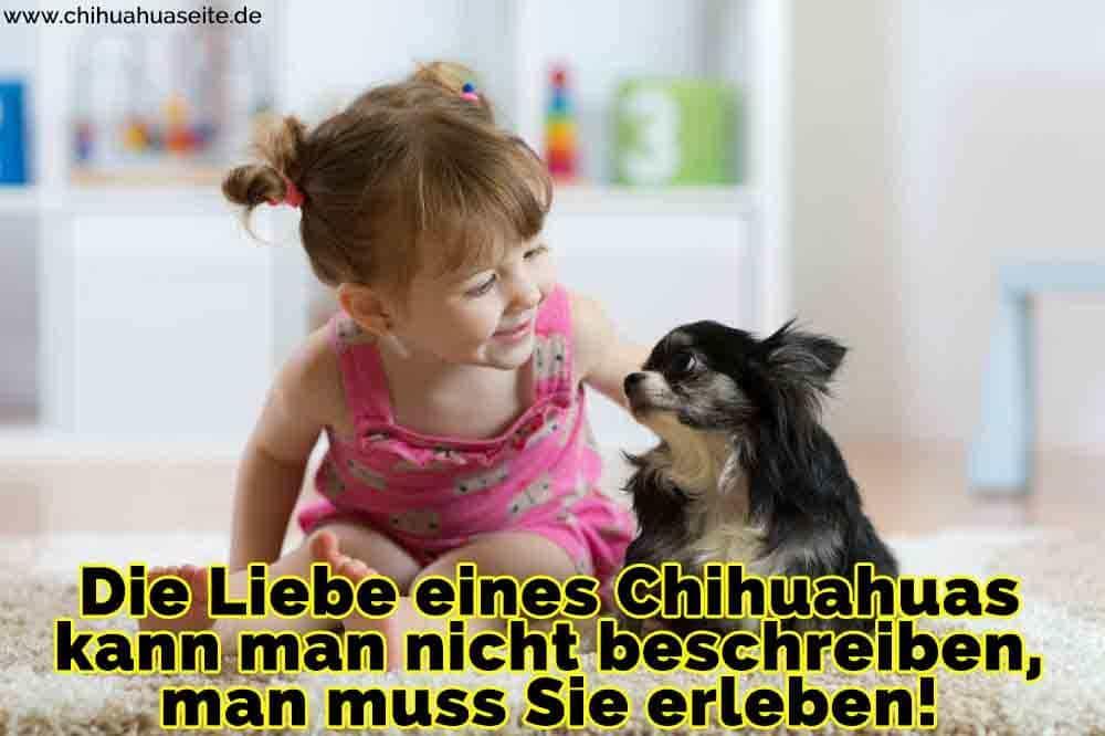 Ein Mädchen streichelt ihren Chihuahua