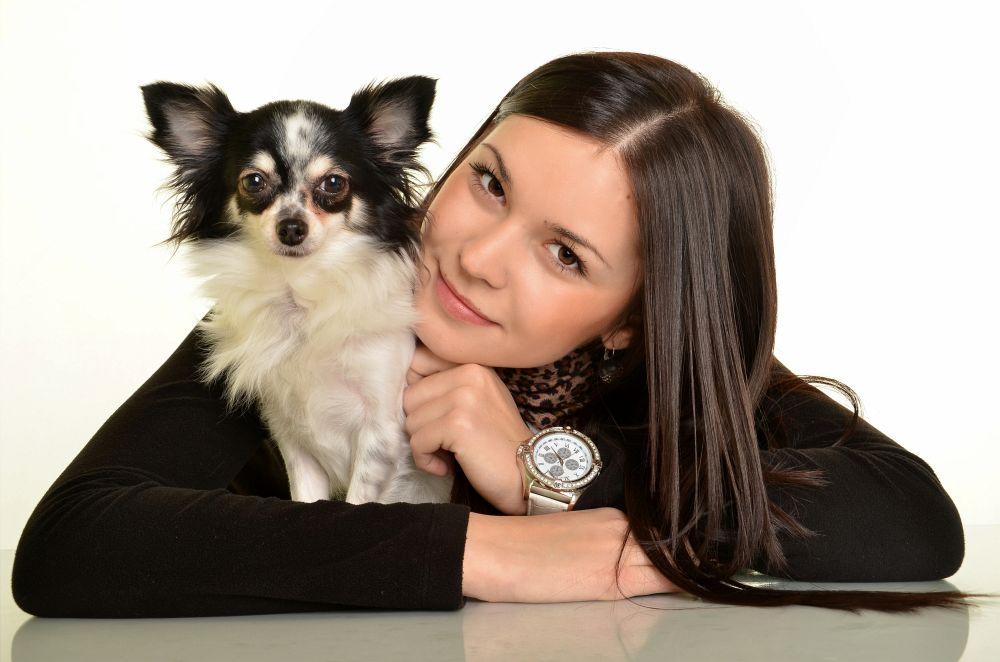 Chihuahua mit Frau