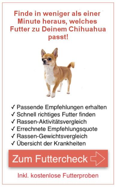 Futterproben Chihuahua